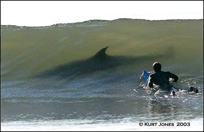 20070116023059-tiburon.jpg