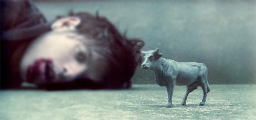 20080423152240-pasto-para-las-vacas.jpg