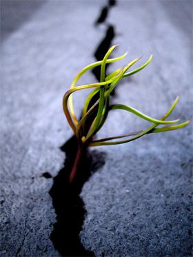 20110325121350-esperanza.jpg
