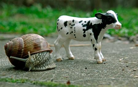 20110530165055-animales-plastico-p.jpg