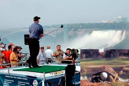 golf-y-tortuga.jpg