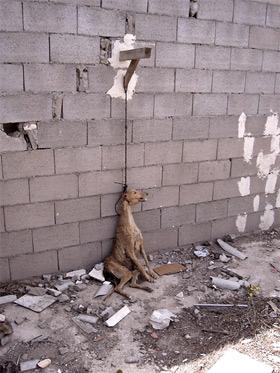 20061120120457-maltrato-animal.jpg