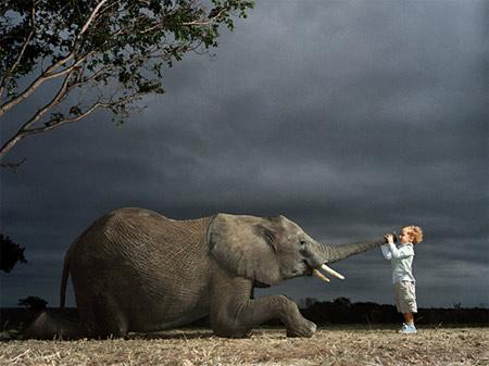 20090203134116-animales.jpg